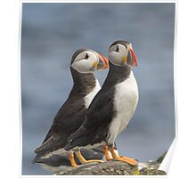 Mr & Mrs Puffin Poster