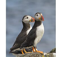 Mr & Mrs Puffin Photographic Print