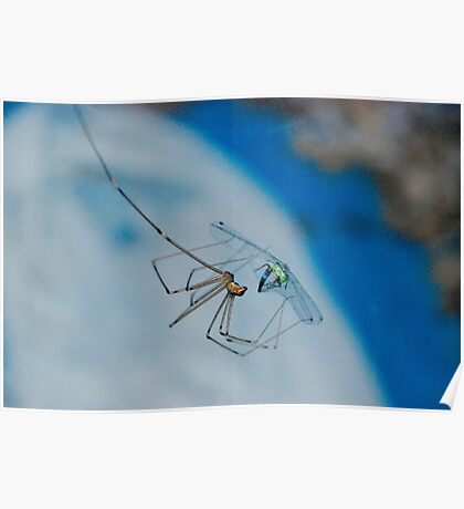 Damsel fly in distress Poster