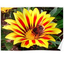 Bumble Bee in a Flower Poster