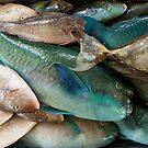 Reef Bounty - Pohnpei, Micronesia by Alex Zuccarelli