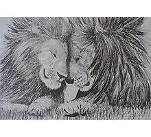 Brotherhood of Lions Photographic Print