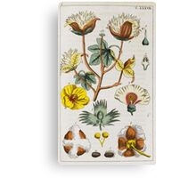 BOTANY - [Wilhelm, Gottlieb Tobias]. Conversations from the natural history of the plant kingdom. Canvas Print