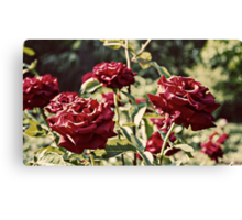 Lux Roses Canvas Print
