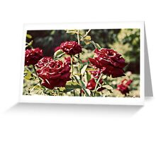 Lux Roses Greeting Card