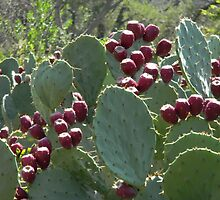 Prickly Pear With A Heart! by Navigator