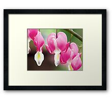 Bleeding Heart Flowers Hanging in a Row Framed Print