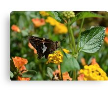 I Dreamt I was a Butterfly Canvas Print