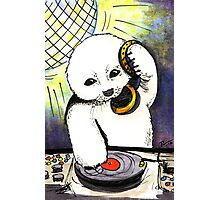 Please Stop Clubbing, Baby Seals Photographic Print