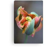 A different Tulp Canvas Print
