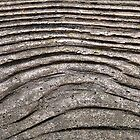 Concrete Wood © by Ethna Gillespie