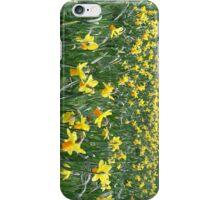 field.of.daffodils iPhone Case/Skin