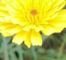 Flower macro Sticker