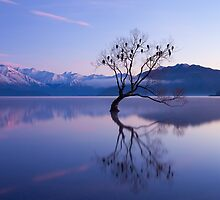 Wanaka Wonder by Nick Skinner