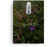 Irish White Orchid, Inishmore Canvas Print