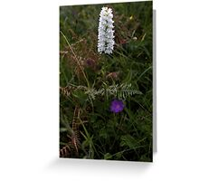 Irish White Orchid, Inishmore Greeting Card
