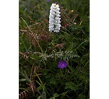 Irish White Orchid, Inishmore Photographic Print