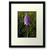 Spotted Orchid, Kilclooney, Donegal Framed Print