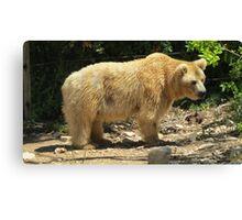 Soggy Bear Canvas Print