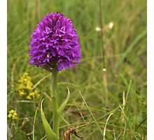 Pyramidal Orchid, Inishmore, Aran Islands  Photographic Print