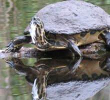 Reflected Turtle  Sticker