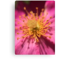 Pink Flower with Yellow Center Canvas Print