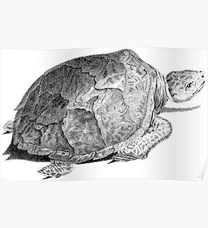 Drudge Reptile  Poster