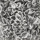 Succulent in Charcoal by Kathy Weaver