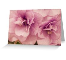 African Violet Macro Greeting Card