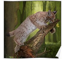 The Lynx and a Butterfly Poster