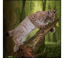 The Lynx and a Butterfly Photographic Print
