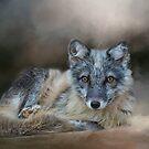 Artic Fox by KathleenRinker