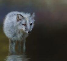 Wading by KathleenRinker