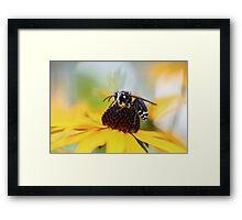 Hornet and Cone Flower 2 Framed Print