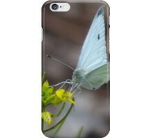 White Sulphur Butterfly iPhone Case/Skin