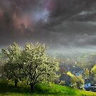 Blossom Trees by Igor Zenin