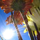 Sun Flare And Flowers by L.D. Franklin