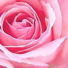 Pastel Pink!! by Richard Keech