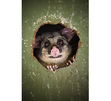 """Fatso"" Brushtail Possum Photographic Print"