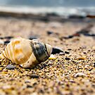 Shell on the pebble beach by Richard Keech