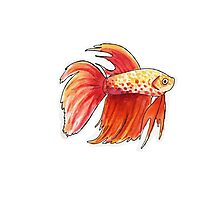 Fish 3 Photographic Print