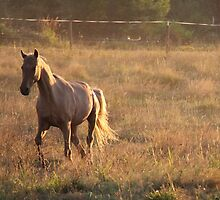Palomino Sundown... by RichImage