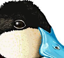 Ruddy Duck Sticker
