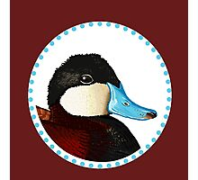Ruddy Duck Photographic Print