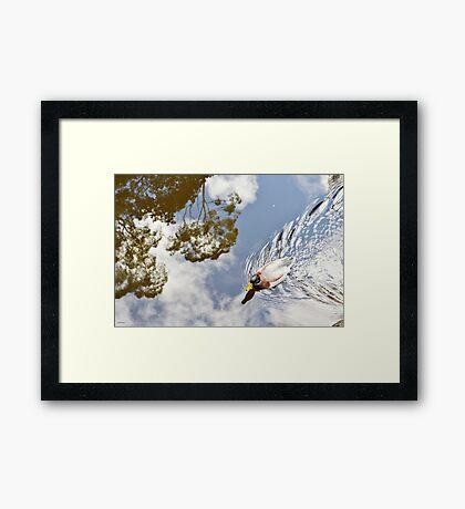 One Little Duck Framed Print