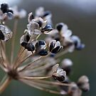 Seed pods by Richard Keech