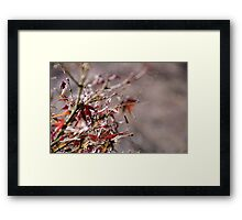 Autumn Touch Framed Print