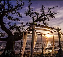 wedding altar blowing in the wind at sunset by johnlackphoto