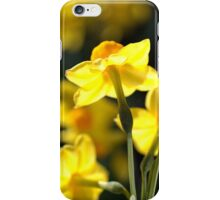 Glowing Lights - Jonquils iPhone Case/Skin