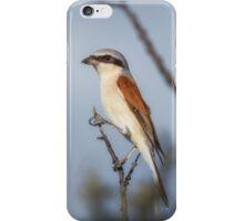 Red-backed Shrike iPhone Case/Skin
